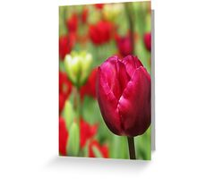 Nature 10 Greeting Card