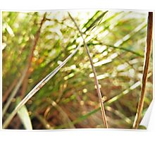 Sunlight and Grass  Poster