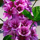 Purple Hollyhock by autumnwind