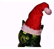 Christmas Cattitude Photographic Print