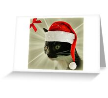 The Glory of the Christmas Kittens Greeting Card