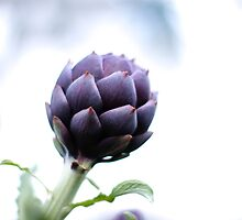 Purple Artichoke by sophie-baxter