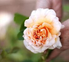 Peach Flower by sophie-baxter