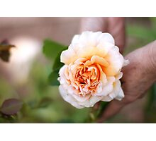 Peach Flower Photographic Print