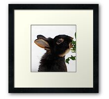 Sprout Thief! Framed Print