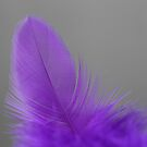 A touch of purple by Steve Small
