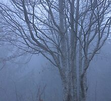 tree in the mist by LauraBalducci