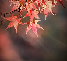 The essence of Autumn by DerekEntwistle