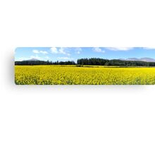 Yellow Fields Panorama Canvas Print