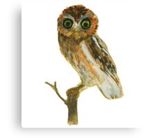 Elf Owl Canvas Print