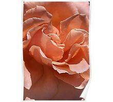 flower-centre-orange-rose Poster