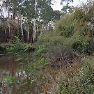 Yarra near Warrandyte Bridge #1 by Tatterhood