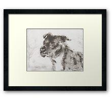 Pitbull Dog Illustration Framed Print