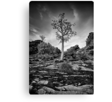 Boab on a Hill Canvas Print
