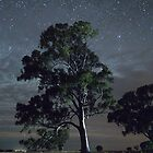 Melrose Tree and Jupiter by pablosvista2