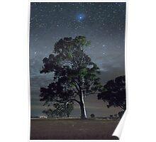 Melrose Tree and Jupiter Poster