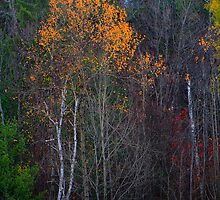 Forest Edge Color by Nazareth