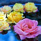 A Bowl of Roses by jayneeldred