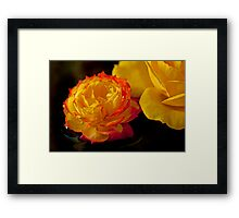 Red-Tipped Yellow Rose Framed Print