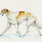 Russian borzoi by Natasha Tabatchikova