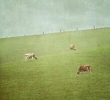 Grazing cows by Jill Ferry