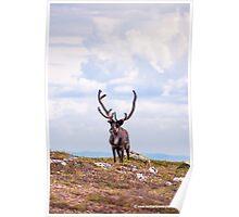 Majestic Reindeer Poster