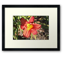 Not another Lily! Framed Print