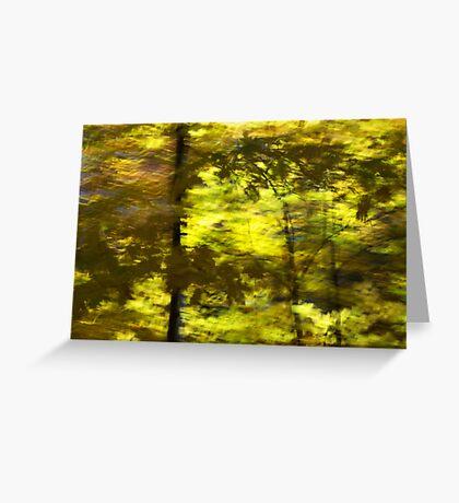 Leaf shadow study - 2012 Greeting Card