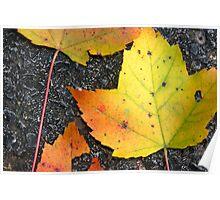 Leaves on asphalt - 2009 Poster