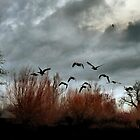 Wildfowl Dusk by Yampimon