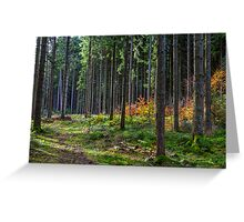 Evening light shines through Germany's Black Forest Greeting Card