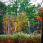 Fall Colors by Zohar Lindenbaum