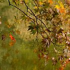 Autumn Reflections  by DIANE  FIFIELD