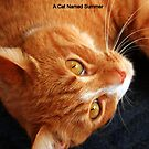 A Cat Named Summer by Laurel Talabere