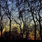 Glorious by Luke Lansdale