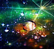 Disco dew by Luke Lansdale