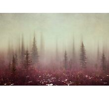 Hazy Days Photographic Print