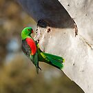 Queensland Wildlife by Blue Gum Pictures