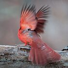 How Do Birds Get Ice Off Of Their Feathers? by barnsis