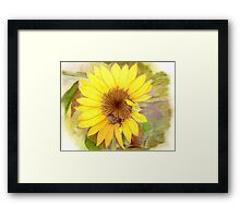 Bumble Bee on Sunflower Framed Print