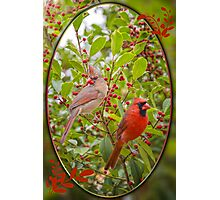 Cardinals in Holly Photographic Print