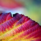 The Rich Colours of Autumn by Lucy Adams