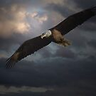 American Bald Eagles by Thomas Young