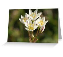 Yard Flowers Greeting Card