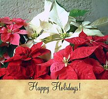 Mixed color Poinsettias 3 Happy Holidays S2F1 by Christopher Johnson