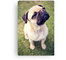 Cheesy Smile Pug *PROCEEDS TO CHARITY* Canvas Print