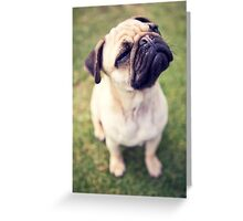 Cheesy Smile Pug *PROCEEDS TO CHARITY* Greeting Card