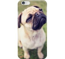 Cheesy Smile Pug *PROCEEDS TO CHARITY* iPhone Case/Skin