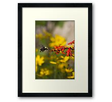 Bumble Bee Red Flower Framed Print