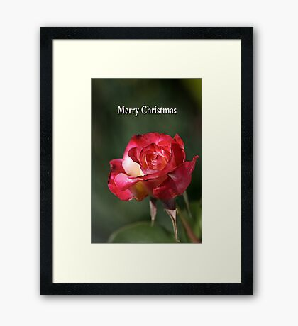 merry christmas- red-white-rose Framed Print